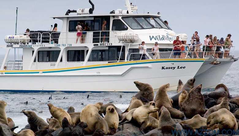 菲利普岛乘船游览,原价$78, 团购价只要$38!在海豹的自然生存环境里观察它们!
