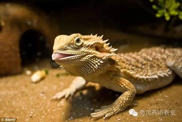 澳洲独特的动物世界 aussie